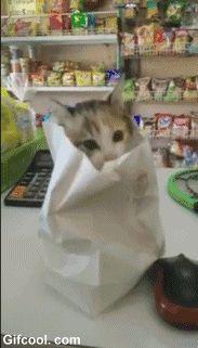 고양이 한봉지주세요 | 유머 게시판 | 루리웹 모바일