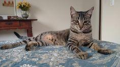 Janjão. Meu caçula. #cat #viralata