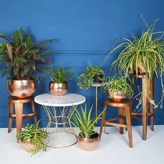 Copper plant pots and luscious green house plants are a match made in heaven!