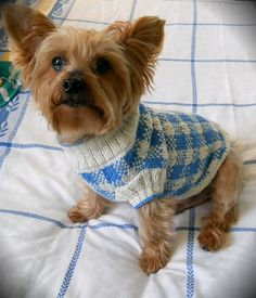 Oh, what a fine Sunday you and your best friend will have at the puppy dogs' picnic! Spread a checkered cloth and share some yummy treats in the sunshine, in this pretty checked sweater knit in two colors of sport weight yarn. Worked partly in the round from the neck down, with