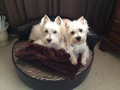 Murphy and Bentley