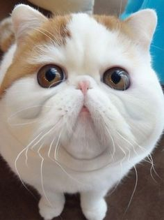 And, like most supermodels, he's got chins for days. | Snoopybabe The Cat Has Taken Over The World