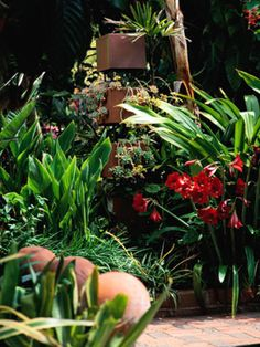Tropical Plants in containers outside on the patio