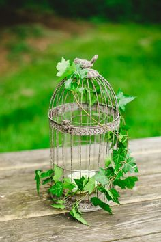A birdcage with trailing ivy