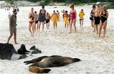 Frolic with sea lions, get up close to giant tortoises, watch albatrosses taking flight and gaze upon iguanas swimming – there's nowhere quite like the Galapagos for a hefty dose of dazzling wildlife.