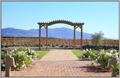 Ponte Winery - Autumn Wedding -Temecula Wine Country Weddings