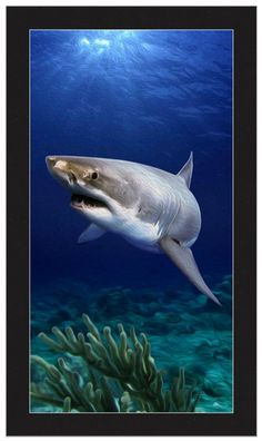 White Water Shark Print or Canvas
