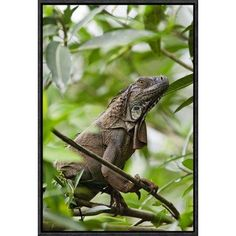"East Urban Home 'Green Iguana on Branches' Framed Photographic Print on Canvas Size: 18"" H x 12"" W x 1.5"" D"