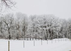 """Winter Forest""  #wylddanePhotography #winter #January #life #retired #transitions #Northwestern #Wisconsin #pictures #photography #landscape #Nikon #S6000"