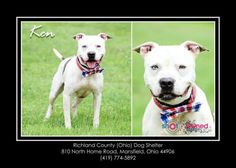 Ken - URGENT - located at RICHLAND COUNTY DOG WARDEN in Mansfield, Ohio - I am really handsome with one of my eyes a very brilliant blue.  I love, love, love toys, especially squeaky toys.