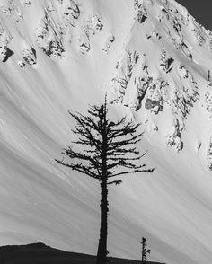 Lone tree skiing.  #lonetree #takethepeak #kootenaylife Lone Tree, Skiing, Mountains, Instagram Posts, Nature, Flowers, Plants, Travel, Life