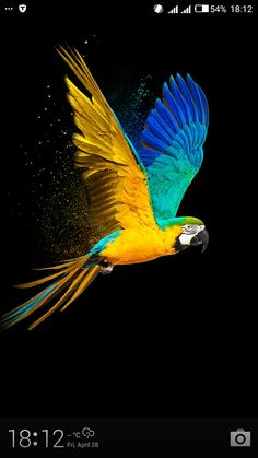 Parrot Wallpaper, Black Phone Wallpaper, Flower Phone Wallpaper, Animal Wallpaper, Nature Wallpaper, Most Beautiful Birds, Beautiful Nature Pictures, Animals Beautiful, Tropical Birds