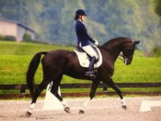 Perfect horse for the ambitious Amateur or Young Rider! Fantastic Hanoverian gelding with the ability, temperament and style to take you wherever you want to go! Took new rider from 1st to PSG in 12 months! $85,000
