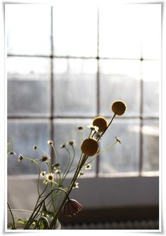 the flowers and window and the contrast just woow :)