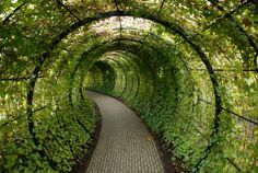 This beautiful tunnel of green ivy doesn't lead to a place you would expect. Located in the Alnwick Garden of Northumberland and operated by the Duchess (of Northumberland), this gorgeous tunnel leads visitors to the locked gates of the Poison Garden. Covered Walkway, Covered Garden, Garden Art, Garden Design, Garden Shop, Poison Garden, Alnwick Castle, Oh The Places You'll Go, Landscape Architecture