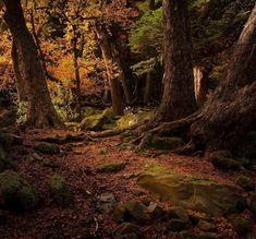 De esos mágicos rincones que nos regala Chile 🇨🇱 📍 Reserva Nacional Altos de Lircay 📸 @jpdelaharpe #wildlifechile #otoño #chile #landscape… Land Scape, Country Roads, Instagram, Beautiful Places, Naturaleza