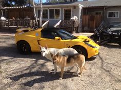 Here is a pic of both my GSDs. I have a male and a female. Love them both #White #German #Shepherd #Dogs #Cars #Lotus