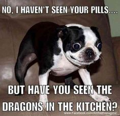 50 Hilarious (And Relatable) Dog Memes For National Dog Day - Funny Dog Quotes - Whoa. The post 50 Hilarious (And Relatable) Dog Memes For National Dog Day appeared first on Gag Dad. Cute Animal Memes, Funny Animal Quotes, Animal Jokes, Cute Funny Animals, Funny Cute, Top Funny, Funny Dog Memes, Really Funny Memes, Funny Relatable Memes