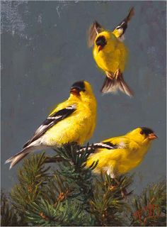 goldfinch painting by Greg Beecham