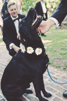Black Labrador Retriever with bright gerbera wreath - South Carolina Low Country Wedding from Sean Money + Elizabeth Fay