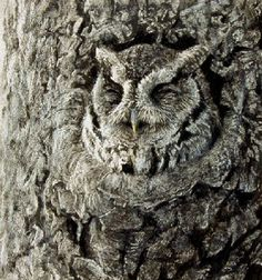Great image of the eastern screech owl (I think) in camouflage. Wildlife Paintings, Wildlife Art, Animal Paintings, Owl Art, Bird Art, Observational Drawing, Screech Owl, Motifs Animal, Owl Pictures