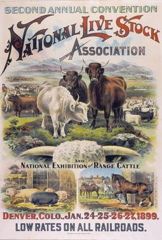 It's #NationalWesternStockShow time! We've got a fantastic archival collection for some great Stock Show history! #NWSS2016 #110years #WildWest #Denver #Colorado #heritage #tradition