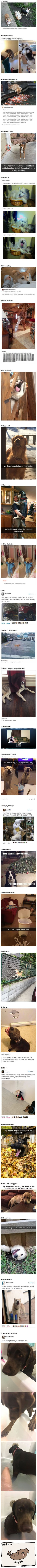 "27 Funny Photos That Will Make You Say, ""I LOVE DOGS"""