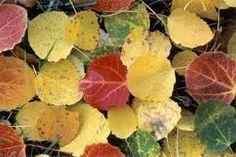 Resultado de imagen para hojas de arboles