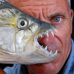 River Monsters: Animal Planet. I don't fish, but I could listen to Jeremy Wade talk about it for hours..lol.
