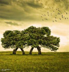 albero che cammina