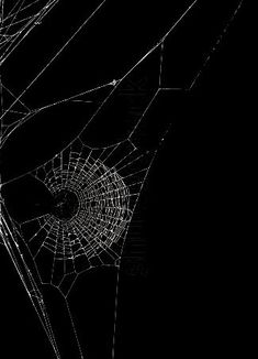 Spider's Web on Black Black N White, Black Widow, Black Swan, Spider Art, Spider Webs, Fotografie Hacks, Itsy Bitsy Spider, Widowmaker, Monochrom