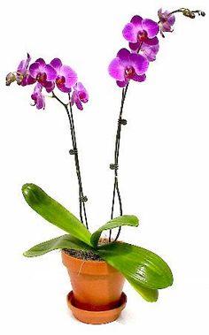 43 Orquideas En 2021 Orquideas Jardín De Orquídeas Plantas De Orquideas