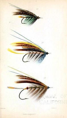 Fishing lures... (art, illustration, woodsy, camping, lake, hiking)