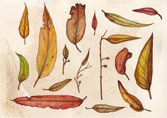 An Assortment of Gumleaves A4 Art Print