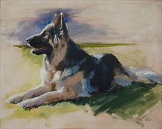 "Najee, Oil on canvas  30""x40"" - Najee is a beautiful two-year-old German Shepard. I created a portrait of him, which now hangs in the lobby of San Francisco Animal Care and Control, the city animal shelter that rescued him and got him adopted into a great home. #petportrait #dogpainting #petpainting #dogportrait"