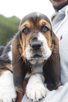 Ok, it's not a cat, but I love Basset Hounds! If I had a dog...it would be a Basset!