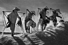 Harvesting salt in Khanh Hoa