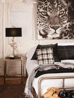 JAWAI Leopard Camp.  Africa.