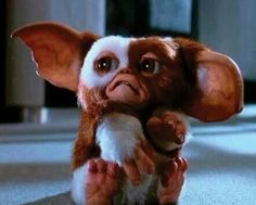 Gremlins Scary Movies, Old Movies, Horror Movies, Gremlins Gizmo, Foreign Movies, See Movie, Monster Art, Cute Images, Cultura Pop