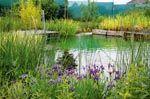 Wasserpflanzen im Schwimmteich