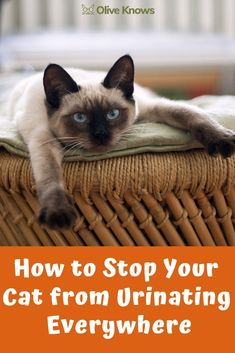 How to Stop Your Cat from Urinating Everywhere - OliveKnows