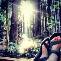 Forest + hike + Tevas = nature