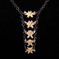 Real Bone Necklace Five Vertebrae and Gunmetal by ScavengedArt, $42.00