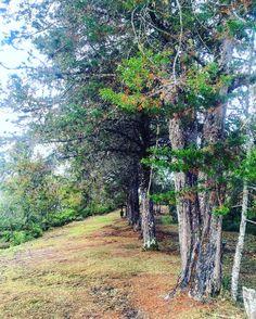 "Parque Ecológico Las Nubes, Ecologycal Park ""Las Nubes"", Senderismo, Hiking, Naturaleza, Nature, Árboles, Trees, Paisaje, Landscape, Montañas, Mointains, Jericó, Antioquia, Colombia"