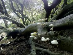 fairy gathering place