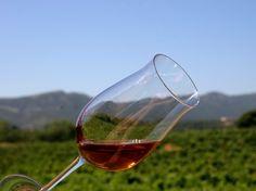 """Apreciar uma boa paisagem com um bom vinho licoroso """"Moscatel"""""""