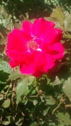#T052015 Atividade - Planta e flor