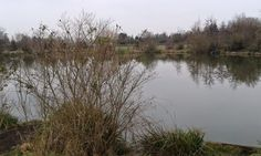 A walk round the fishery lake 12th Feb