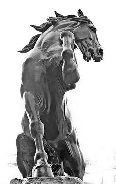 "Tristan Govignon, ""Horse""  45 in. x 72 in.  Dye transfer on aluminum"