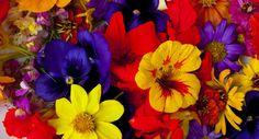 Que tal servir flores no jantar?